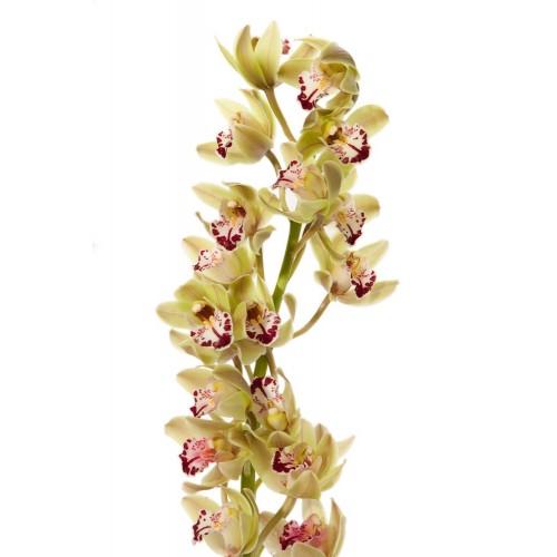 Skinta Orchidėja